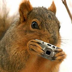 Spysquirrel